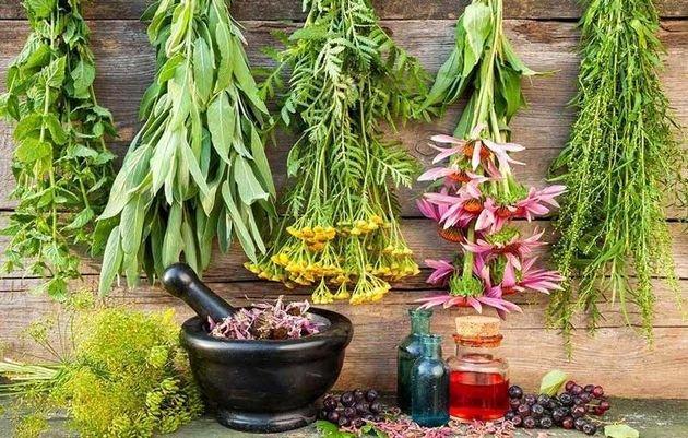 وجود 2700 گونه گیاه دارویی در کشور