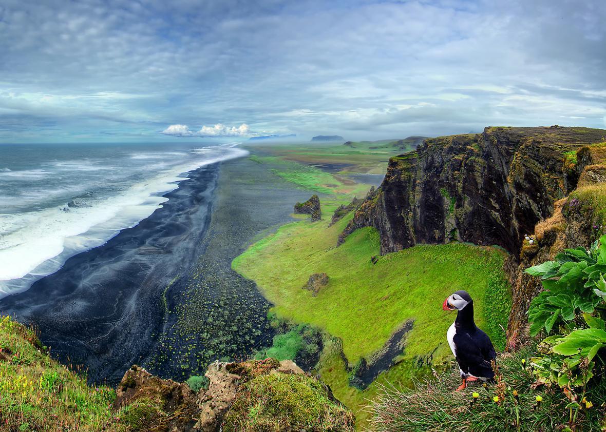 آشنایی با پافین آتلانتیک (Atlantic puffin)