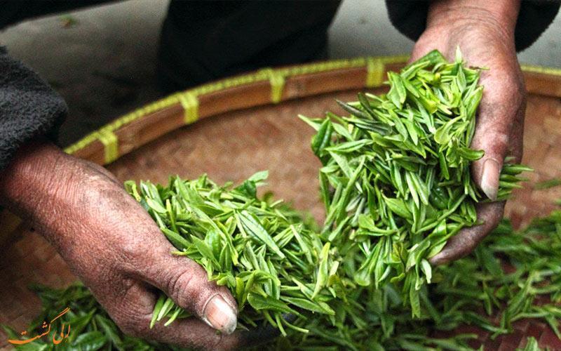 بهترین مزارع چای دنیا در کدام کشورها قرار دارند؟